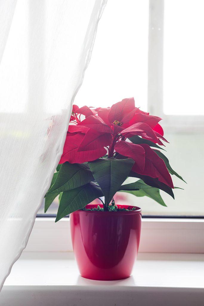 božićna-posetija-prozor-domnakvadrat