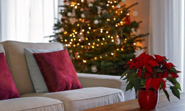 božić-bor-zvijezda-domnakvadrat