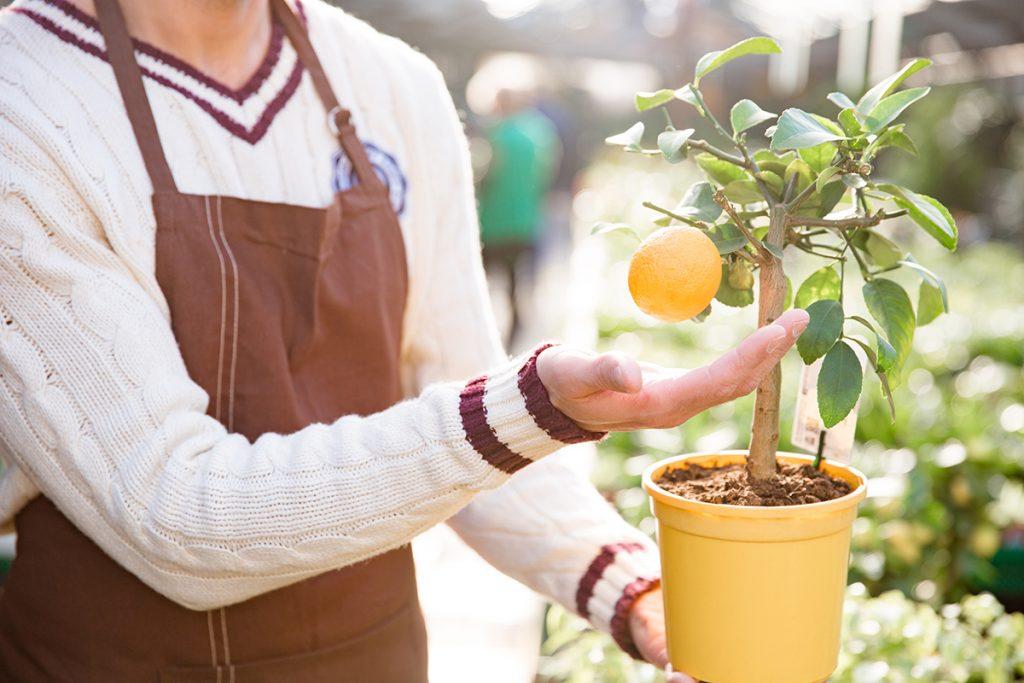 citrus-u-tegli-domnakvadrat