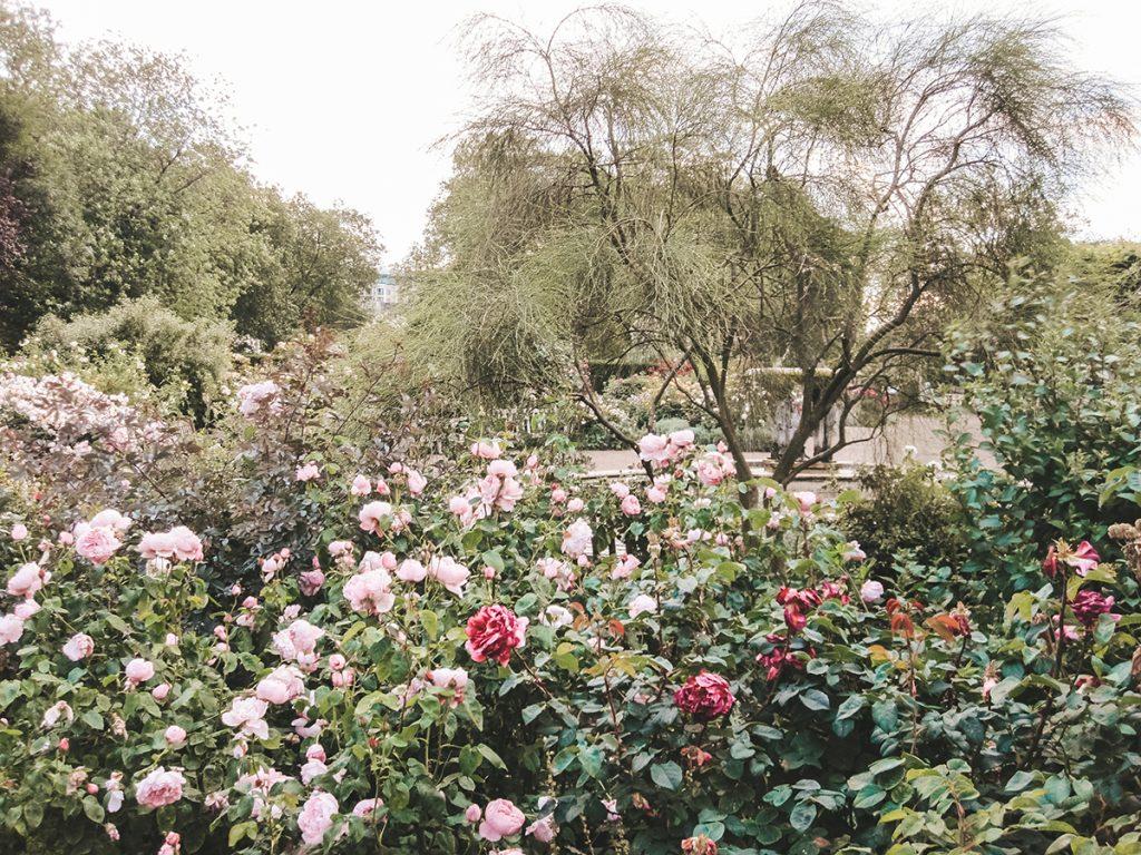 engleski-vrt-ruže-domnakvadrat