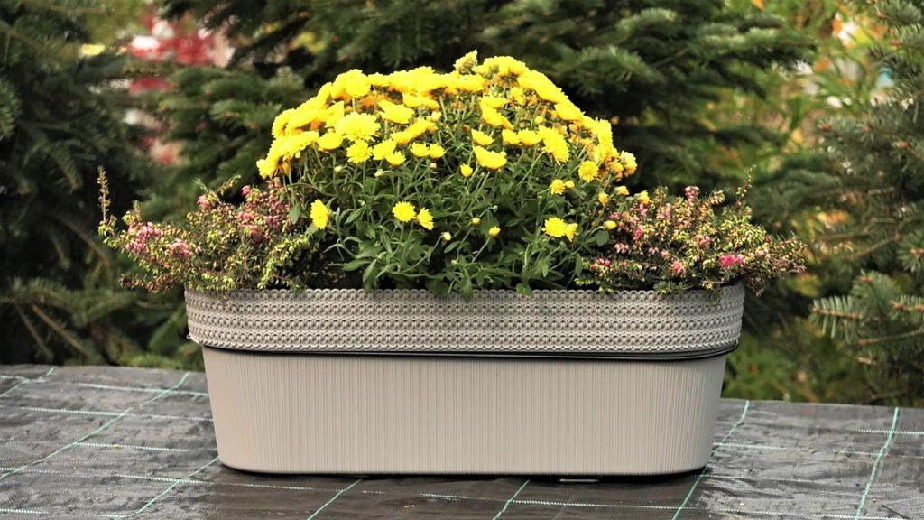 balkonska-žardinjera-zimsko-cvijeće-vrtni-centar-šestine-domnakvadrat