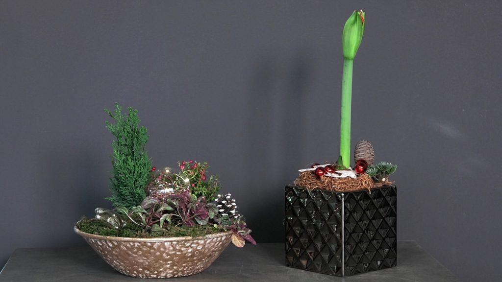cvjetne-božićne-kombinacije-iris-mbm-domnakvadrat