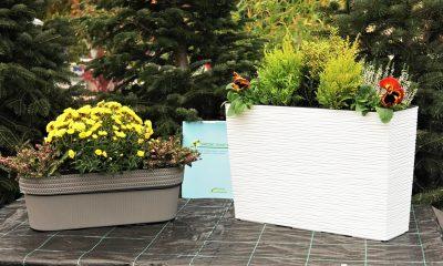 žardinjere-zimsko-cvijeće-vrtni-centar-šestine-domnakvadrat