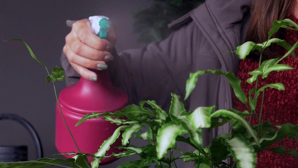 prskanje-biljke-iris-mbm-domnakvadrat