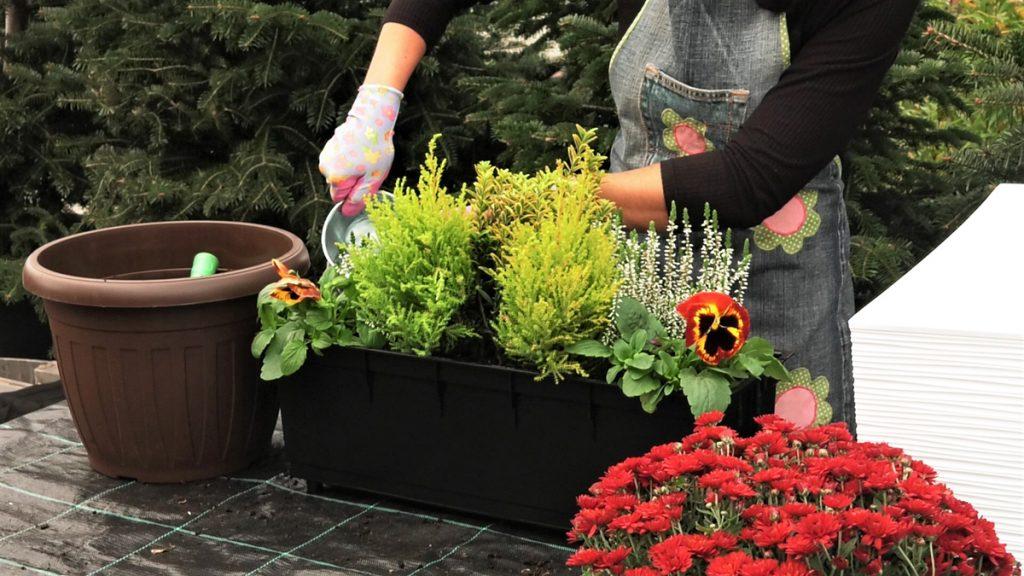 zalijevanje-posađenog-cvijeća-vrtni-centar-šestine-domnakvadrat