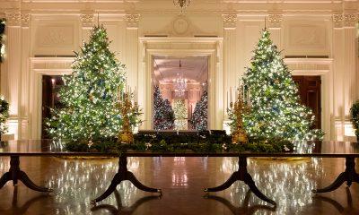 borovi-božić-ukrasi-sad-domnakvadrat