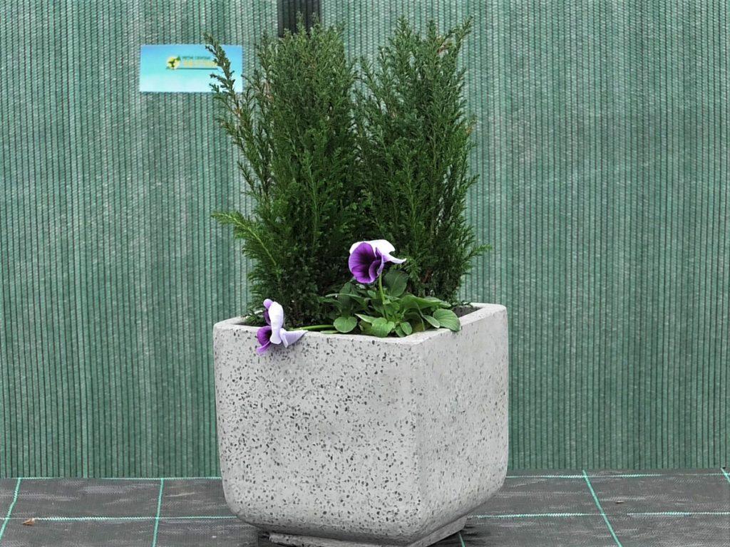 konifere-maćuhice-vrtni-centar-šestine-domnakvadrat