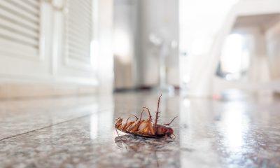 kuhinja-pod-mrtvi-žohar-domnakvadrat