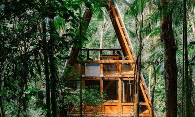 monkey-house-brazil-šuma-domnakvadrat