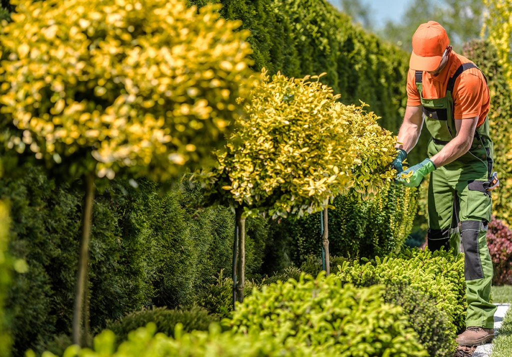 čovjek-uređuje-vrt-domnakvadrat