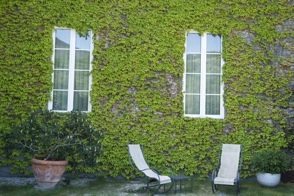 kuća-zid-bršljan-domnakvadrat