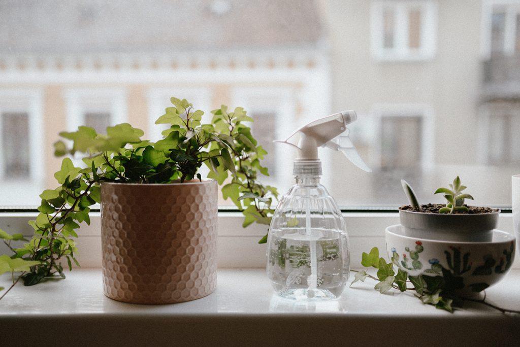 sobne-biljke-domnakvadrat