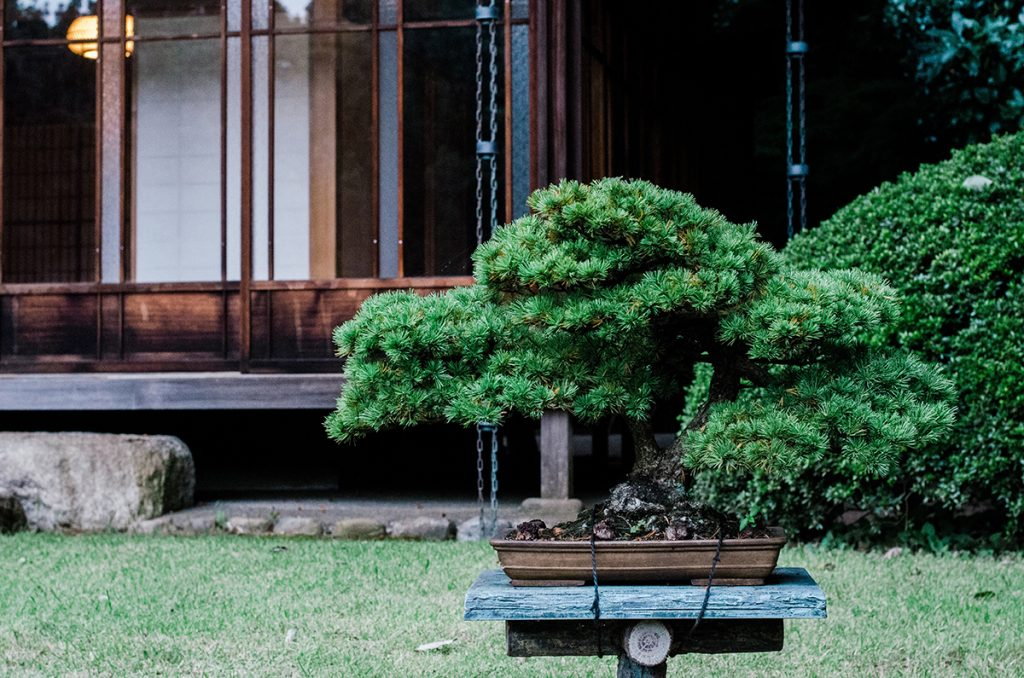 bonsai-drvce-vrt-domnakvadrat