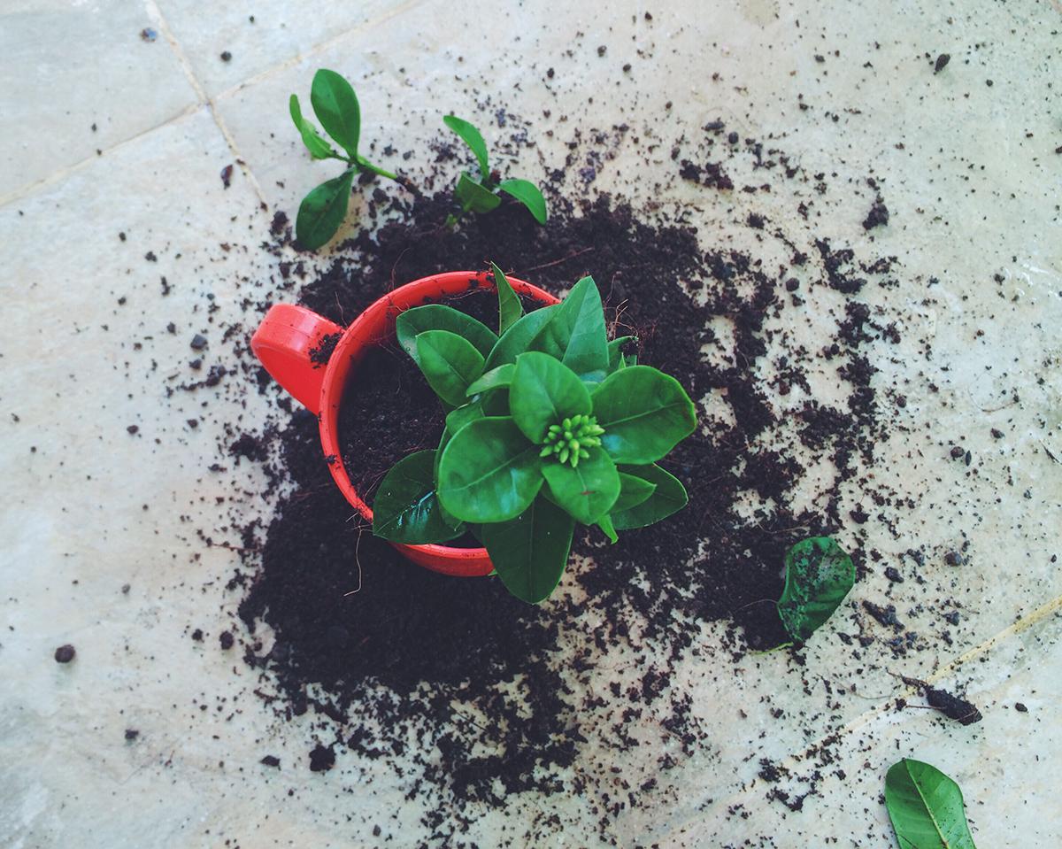 šalica-kao-tegla-za-cvijeće-domnakvadrat