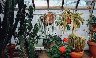 razni-kaktusi-domnakvadrat