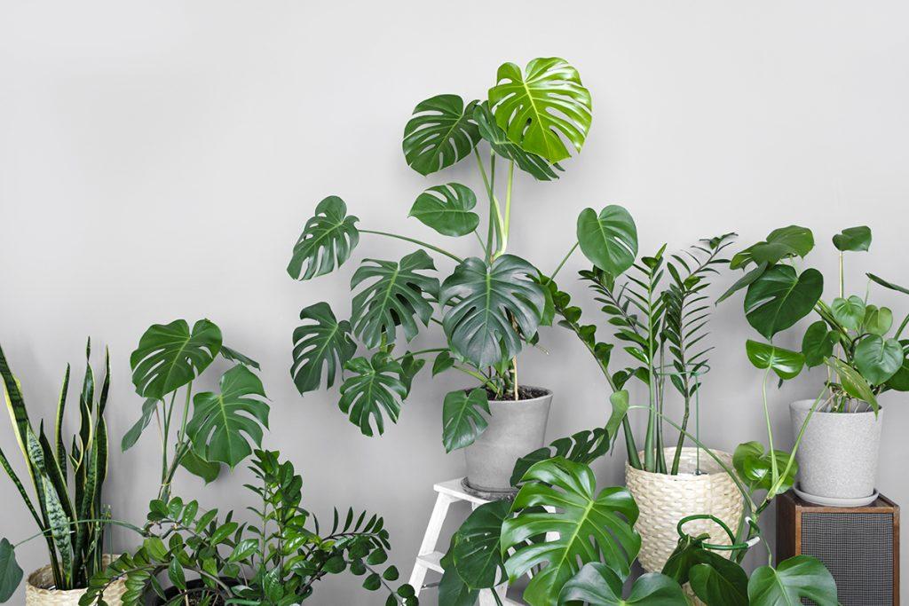 sobne-biljke-razne-domnakvadrat