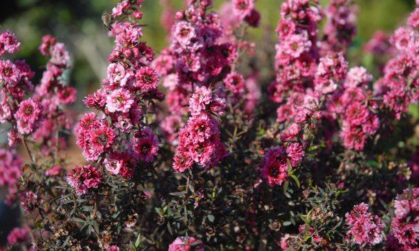 grmolika-biljka-domnakvadrat