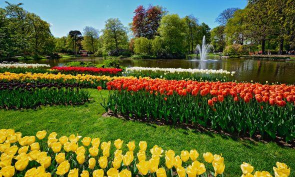 tulipani-park-domnakvadrat