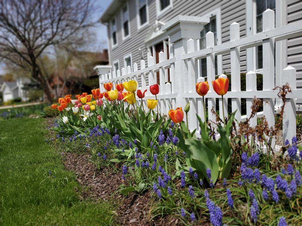 tulipani-vrt-domnakvadrat