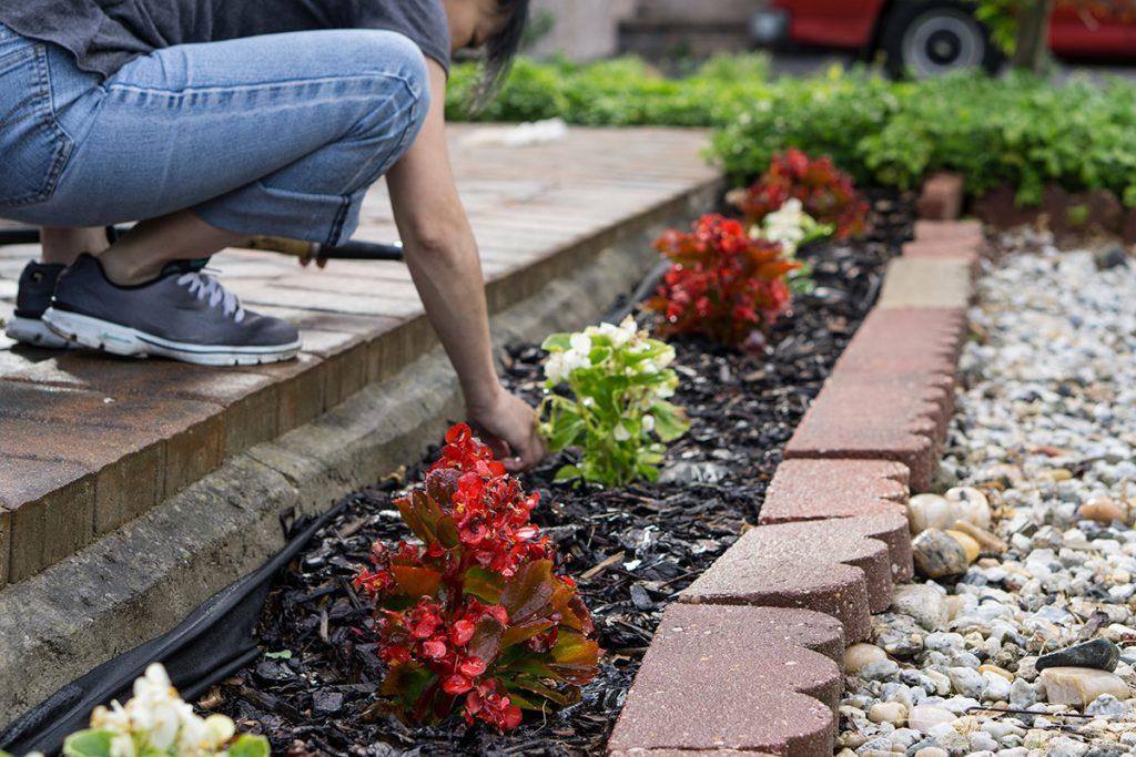 sadnja-biljaka-domnakvadrat
