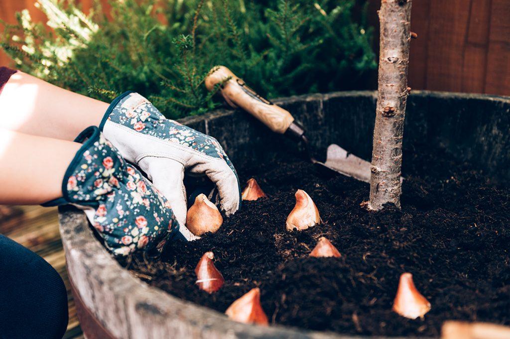 sadnja-tulipana-domnakvadrat