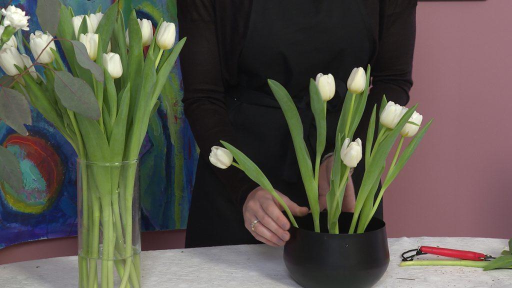 pikanje-tulipana-domnakvadrat