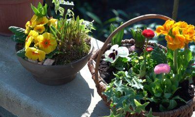 proljetne-dekoracije-proljetnice-domnakvadrat