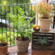 balkon-biljke-razne-domnakvadrat