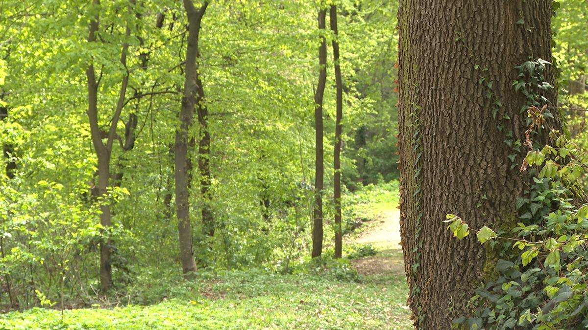 šuma-domnakvadrat