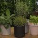 bilje-u-raznim-teglama-domnakvadrat