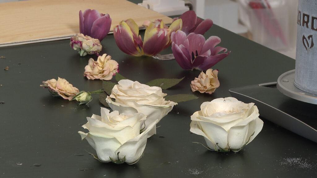osušeno-cvijeće-domnakvadrat