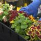 sadnja-žardinjere-svibanjsko-cvijeće-vrtni-centar-šestine-domnakvadrat