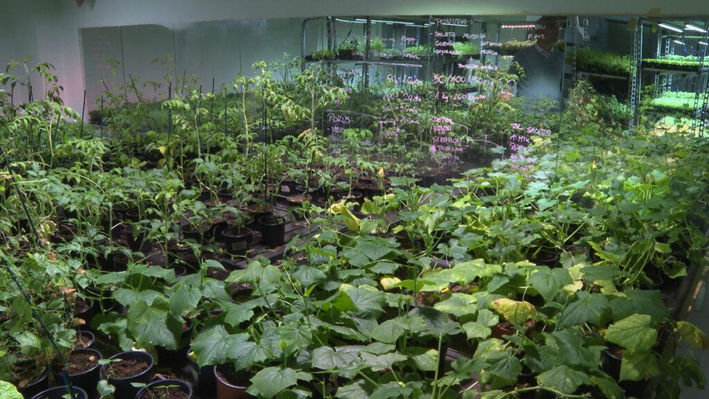 urbana-farma-razne-biljke-domnakvadrat