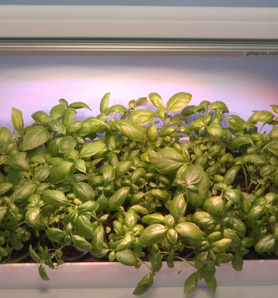 začinske-biljke-urbano-vrtlarenje-domnakvadrat