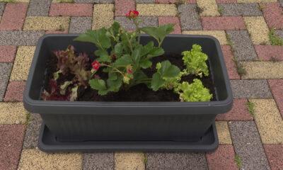 žardinjera-salate-balkonski-vrt-vrtni-centar-šestine-domnakvadrat