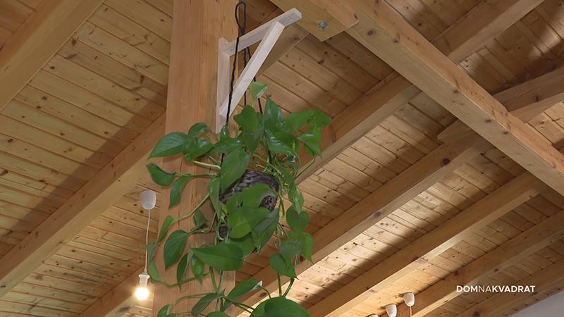 biljka stan ukrasna