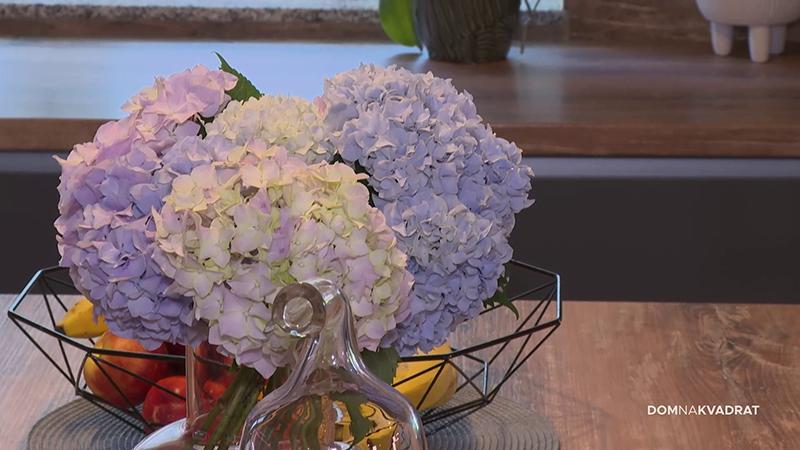 cvijeće biljke