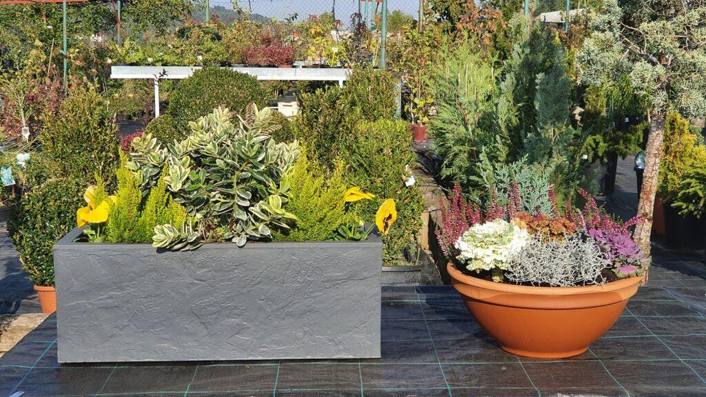 jesensko-ukrasno-bilje-vrtni-centar-šestine-dom-na-kvadrat