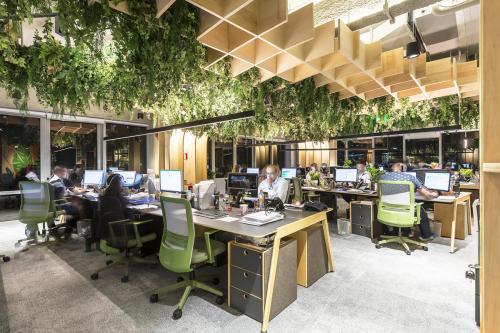 biljke-radni-prostor-brazil-domnakvadrat