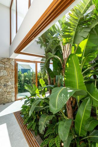 biljke-razne-interijer-brazil-domnakvadrat